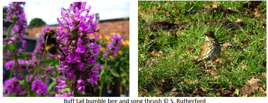 bumble bee and song thrush